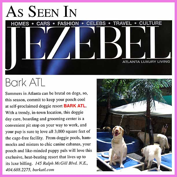 jezebel magazine best dog boarding atlanta