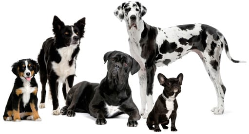 home_dogs_10